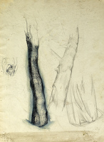 Sheet of studies - tree trunk...