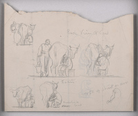 Back view of cow- sheet of studies